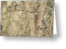 Bluebird And Sparrow Greeting Card by Heather Applegate