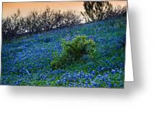Bluebonnet Shoreline Greeting Card by Inge Johnsson