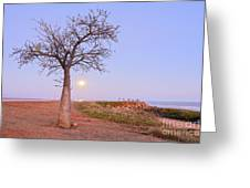Boab Tree And Moonrise At Broome Western Australia Greeting Card by Colin and Linda McKie
