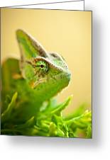Bob The Chameleon  Greeting Card by Samuel Whitton