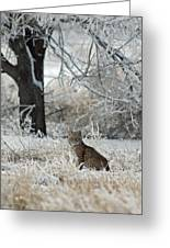 Bobcat And Heavy Frost Greeting Card by Gary Langley