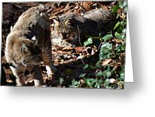 Bobcat Couple Greeting Card by Eva Thomas