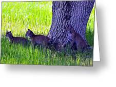Bobcat Cubs Greeting Card by Diana Berkofsky