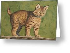 Bobcat Kitten Greeting Card by Crista Forest