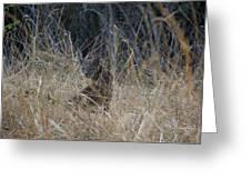 Bobcat Kitten In The Underbrush Greeting Card by Scott Lenhart