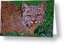 Bobcat Sedona Wilderness Greeting Card by  Bob and Nadine Johnston