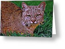 Bobcat Sedona Wilderness Greeting Card by Bob and Nadine Johnston