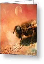 Bokeh Bee Greeting Card by Lee-Anne Rafferty-Evans