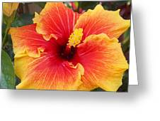 Bold And Beautiful  Greeting Card by Mindy Sue Werth