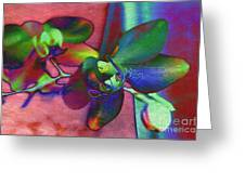 Bold Orchids Greeting Card by Janice Rae Pariza