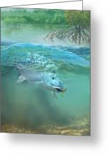 Bone Fish Greeting Card by Rob Corsetti