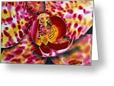 Bonnie Orchid IIi Greeting Card by Daniel Jean-Baptiste