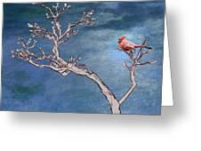 Bonsai Cardinal Greeting Card by John Haldane