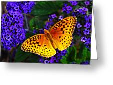Boothbay Butterfly Greeting Card by Bill Caldwell -        ABeautifulSky Photography