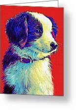 Border Collie Puppy Greeting Card by Jane Schnetlage