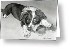 Border Collie Puppy Greeting Card by Sarah Batalka