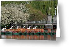 Boston Swan Boats  Greeting Card by Juergen Roth