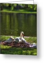 Boston's Romeo And Juliet Swans Greeting Card by Joann Vitali