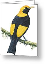 Bowerbird Greeting Card by Anonymous