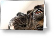 Boxer Dog's Head Greeting Card by Jana Behr