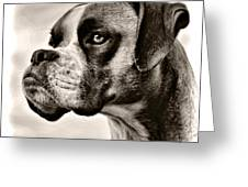 Boxer Profile Greeting Card by Lana Trussell