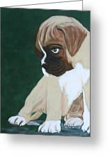 Boxer Pup Greeting Card by Michele Turney
