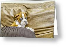 Boxer Puppy On Couch Greeting Card by Tony Moran