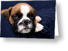 Boxer Puppy Sleeping Greeting Card by Weston Westmoreland
