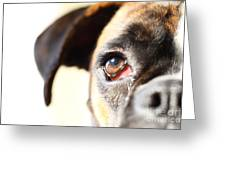 Boxer's Eye Greeting Card by Jana Behr