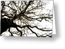 Branches Greeting Card by Michelle Calkins