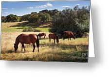 Breed Of Horses Greeting Card by Carlos Caetano