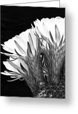 Brilliant Blossoms Diptych Left Greeting Card by Kelley King