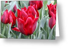 Brilliant Red Tulips in the Garden Greeting Card by Jennie Marie Schell
