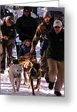 Bringing The Sled Up To The Line Greeting Card by Feva  Fotos