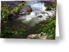 Brook Of Tranquility Greeting Card by Karen Wiles