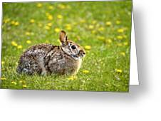 Brown Bunny In Green Grass Greeting Card by Christina Rollo