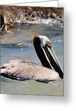 Brown Pelican Greeting Card by Bruce Bley
