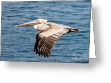 Brown Pelican Flying Greeting Card by Darleen Stry