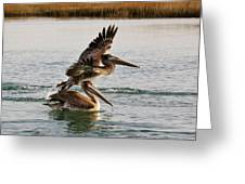 Brown Pelicans In The Marsh Greeting Card by Paulette Thomas
