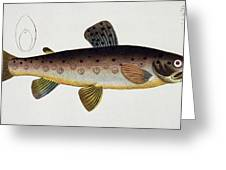 Brown Trout Greeting Card by Andreas Ludwig Kruger