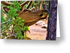Browsing Red Deer In The Grand Canyon Greeting Card by  Bob and Nadine Johnston