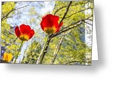 Bryant Park Tulips New York  Greeting Card by Angela A Stanton