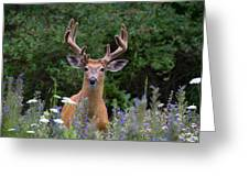 Buck In Meadow Greeting Card by Jim Cumming