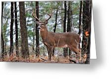 Buck Master Greeting Card by Leslie Kirk