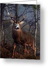 Buck On Ridge Greeting Card by Jim Cumming