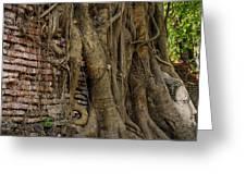 Buddha Head Encased In Tree Roots Greeting Card by Paul W Sharpe Aka Wizard of Wonders