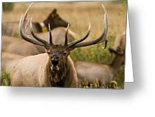 Bugling Elk Greeting Card by Stefan Carpenter
