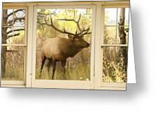 Bull Elk Window View Greeting Card by James BO  Insogna