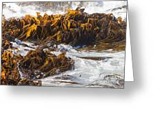 Bull Kelp Durvillaea Antarctica Blades In Surf Greeting Card by Stephan Pietzko