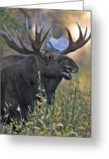 Bull Moose Calling Greeting Card by Gary Langley